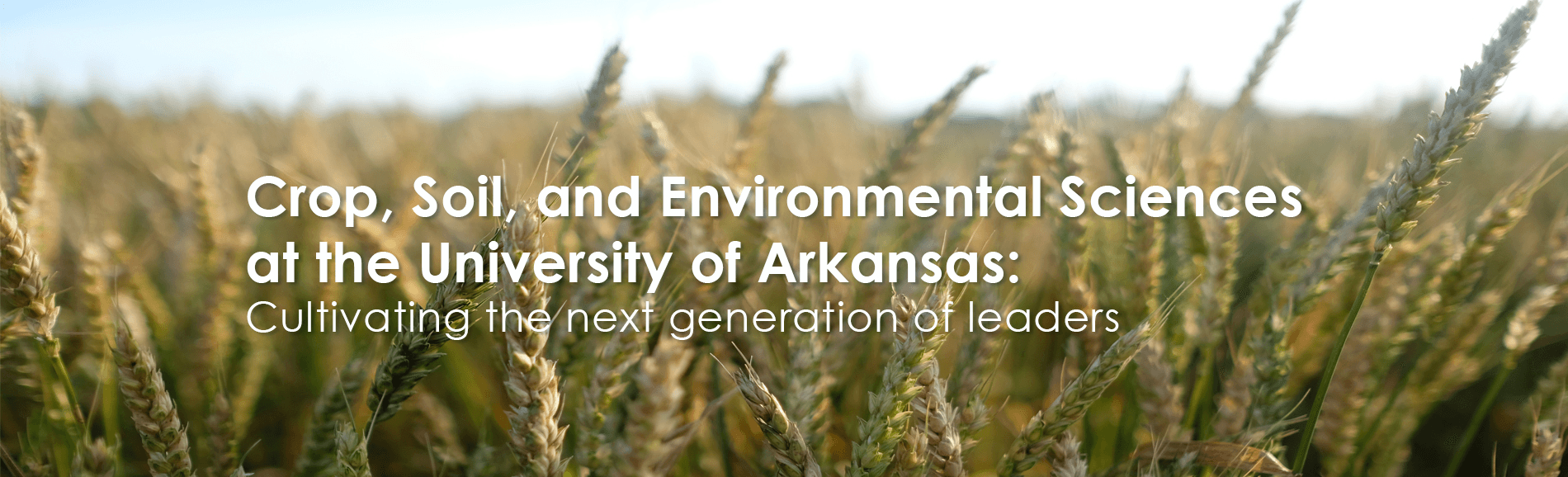Field of wheat with text overlay that says Crop, Soil and Environmental Science at the University of Arkansas: cultivating the next generation of leaders